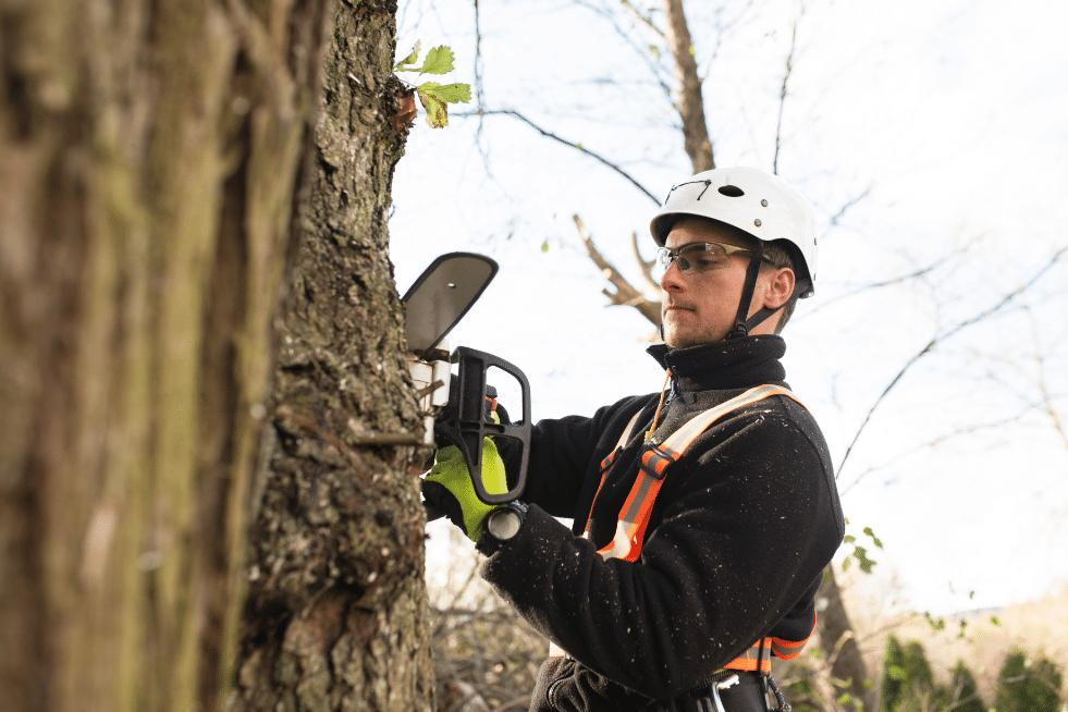 Tree Service Vallejo CA - About
