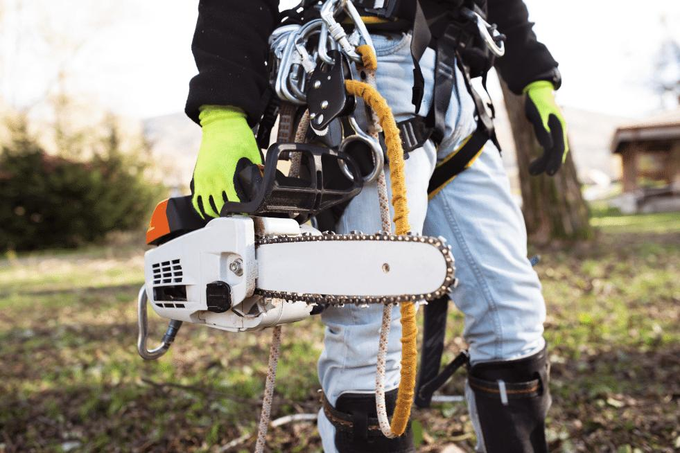 Tree Service Vallejo CA - Equipment and Chainsaw