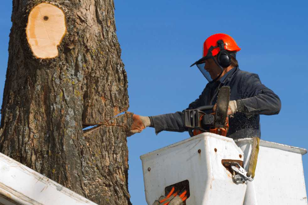 Tree Service Vallejo CA - Services