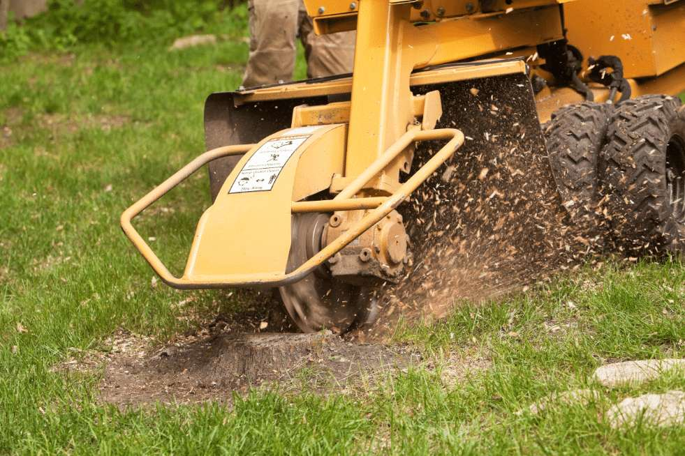 Tree Service Vallejo CA - Stump Grinder Grinding A Stump