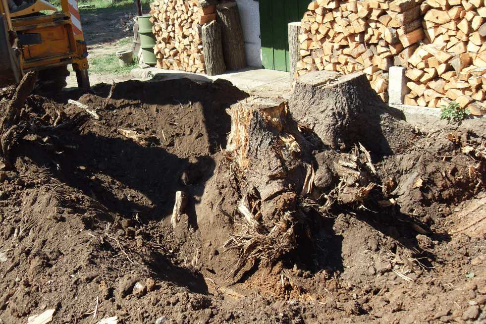 Tree Service Vallejo CA - Stump Removal along with the roots
