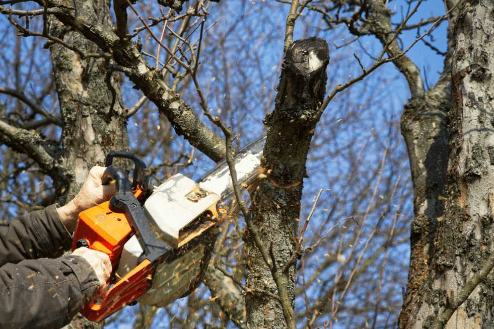Tree Service Vallejo CA - Tree Trimming & Pruning