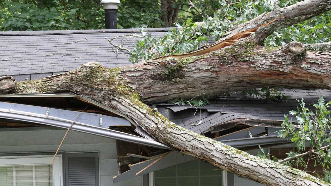 Tree Service Vallejo CA - Emergency Tree Service
